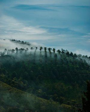 Misty Valparai #BestTravelPictures Landscape