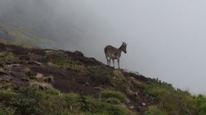 Follow The Sambar Deer! @tripotocommunity #HeightHills #Cloudy #Nature #Kerala  #BestTravelPictures