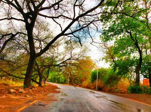 Getting lost in the greenery! #colourgreen #gogreen
