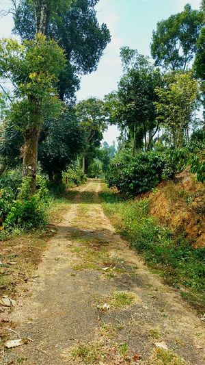 Ten Experiences That You Must Encounter in Coorg, Madikeri