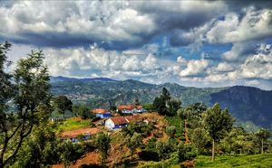 Ooty! Home to Nilgiris