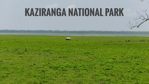 Exploring North East of India | Kaziranga
