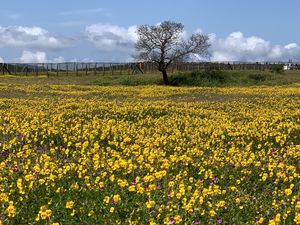 Flower Paradise of Maharashtra