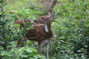 """There's no season like deer season."" #BestTravelPictures @tripotocommunity @jetairways"