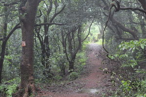 Way to jungle at hill. Come to matheran fill the nature #BestTravelPictures