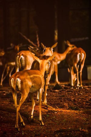 #bestravelpicture #animal #wildlife #chennai