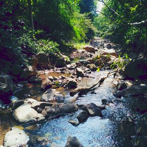 """""""Nature is Beautiful"""" #BestTravelPictures #MobilePhotography #BarapaharJungle"""