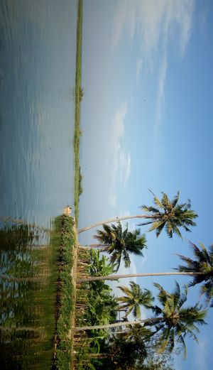 Coconuts trees are the best a one could watch while in boathouse  #BestTravelPictures @jetairways