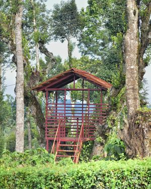 An empty shelter in kodagu (Coorg) jungle