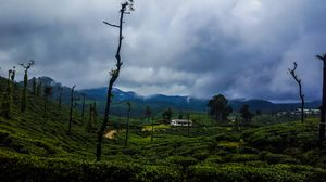 Perfect weekend getaways to Wild and Green Valparai