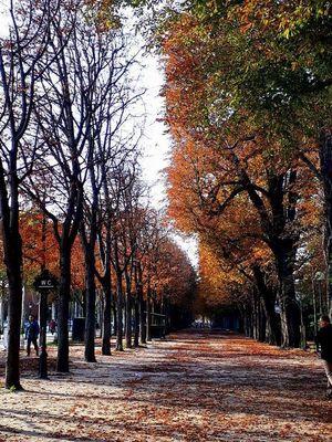 The color transition #natural #nature'scolorcode #paris #eurotrip