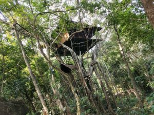 Wayanad - from our Tree House