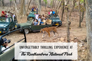 Unforgettably Thrilling Experience At The Ranthambore National Park