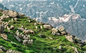 Iconic postcard view at Triund Hilltop! #colourgreen