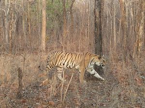 Jungle Jungle - Our Pench Adventure