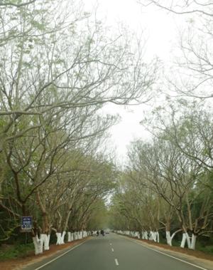 IncredibleIndia????????#KonarkPuriRoad#Nature'sBeauty#Viewisintheeyesoftheviewer