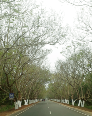 IncredibleIndia #Nature'sBeauty #KonarkPuriRoad #Beautiisintheeyesofviewer #Traveller #Photooftheday