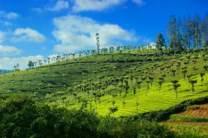 Wish all landscapes on our planet earth were this luscious green #BestTravelPictures