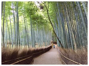 A late evening walk through the serene bamboo groves of Arashiyama. #BestTravelPictures