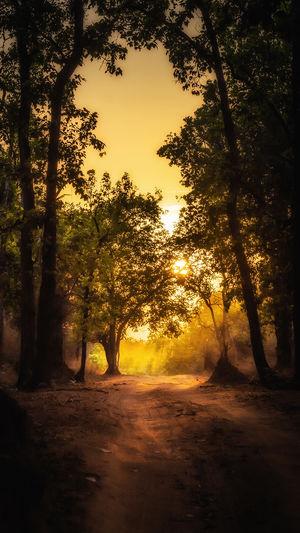 Bandhavgarh light #BestTravelPictures