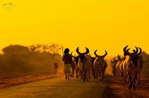 Bhuj cattle herder #BestTravelPictures