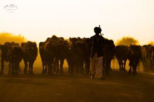 Cattle herder at Bhuj #BestTravelPictures