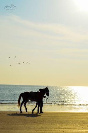 Mandvi beach #BestTravelPictures