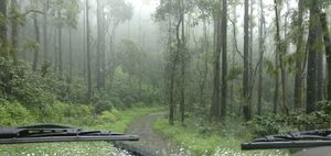 The breathtaking view of the dense forests in chikmagalur #besttravelpictures #tripotocommunity