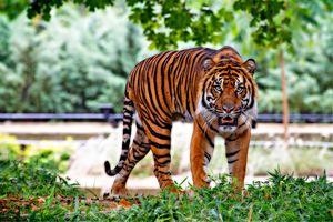 Best sanctuary of U.P. जंगल का असली रोमांच देखना है तो इसे ज़रूर पढ़े ।