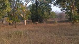 Panna Tiger Reserve, January 2019