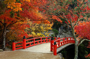 Best places in Asia to experience Fall foliage !!