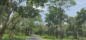 Scenic drive from Bangalore to Ooty via Bandipur forest #colourgreen