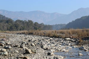 Jim Corbett Jungle Safari- Weekend Gateway From Delhi