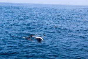 Mirissa - Offbeat Gateway Of Sri Lanka | Sri Lanka | Watch Whale | Dolphins