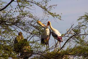 Visit Keoladeo National Park for a superlative experience