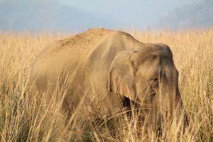 Jim corbett amazing wildlife