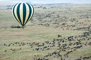 6 Animal Migrations That Can Put the Greatest of Human Travel Stories to Shame