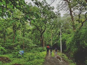 Greens of Dandeli - #mydiscovery on #monsoonplace #staycation