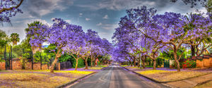 Pretoria 1/undefined by Tripoto