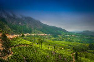 World's Highest Tea Estate