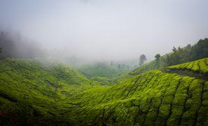Mist-ery of Munnar