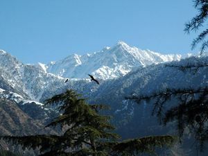 Travel Hiking in Dharamsala & Kasol 8 Day Itiniery : Day 1-3