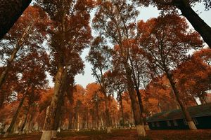 A Perfect Autumn Weekend in Kashmir