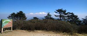Himalayan Singalila Ridge Trek from Sandakphu to Phalut 8 Day Itinerary : Days 4-8