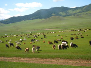 Unusual Experiences in Gobi Desert in Mongolia and China 11 Days Itinerary : Days 8-11
