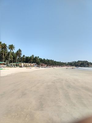 Mojo of Palolem beach,south goa