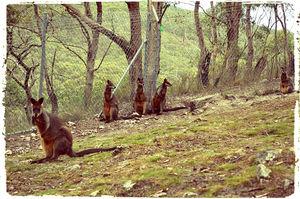 Cleland Wildlife Park 1/1 by Tripoto