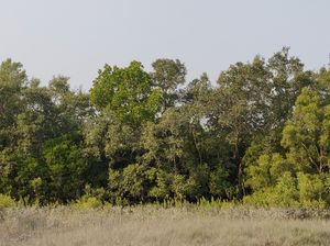Sunderbans: an experience beyond mangroves