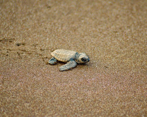 Roadtrip to Velas Turtle Festival under Rs. 1500 | Naughty and Curly