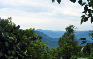 Head to Agumbe this weekend for arts, music, green and everything in between